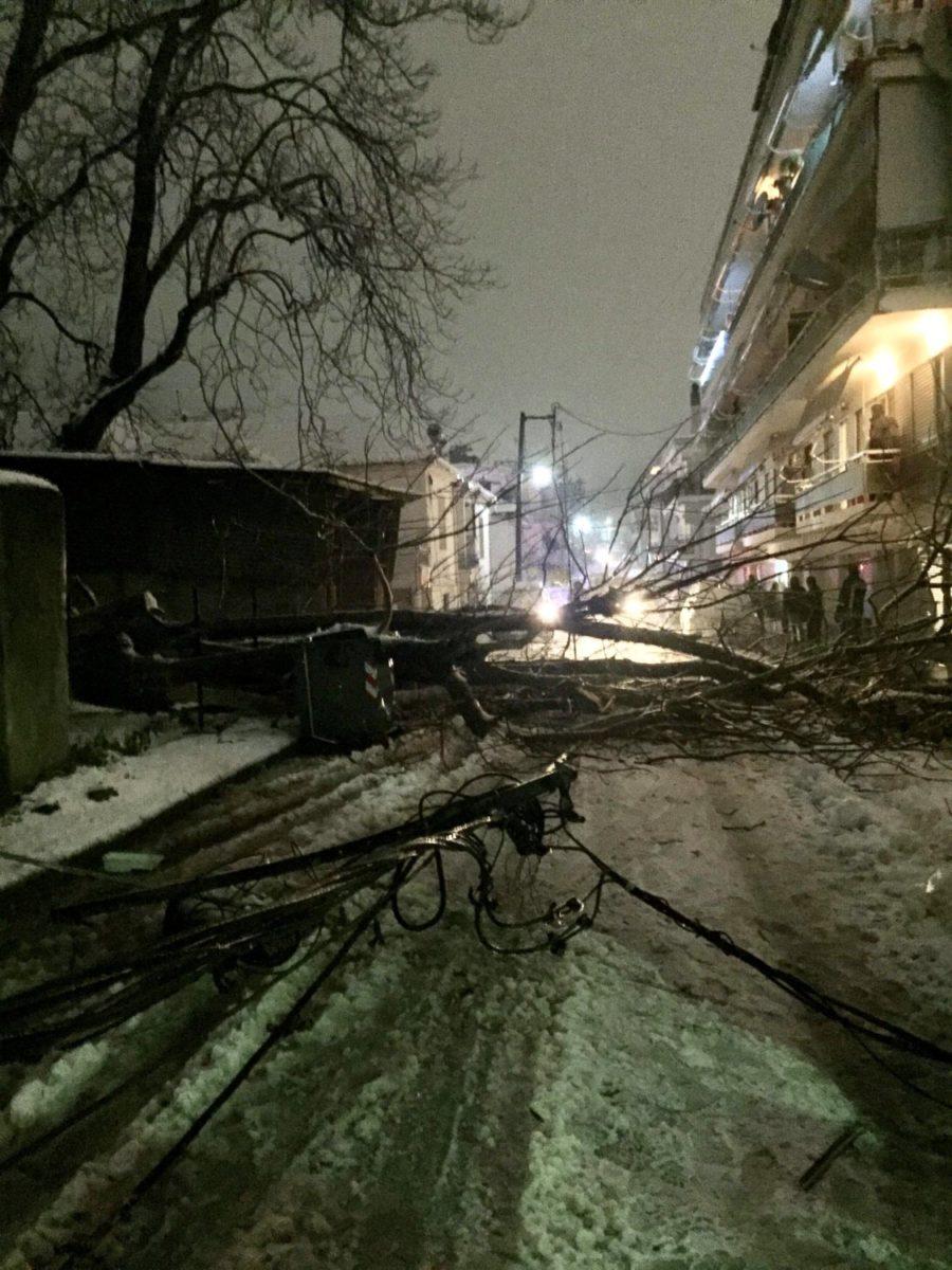 Photo of Έπεσε δέντρο σε κεντρικό σημείο των Φαρσάλων