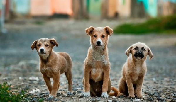 Photo of Χρηματοδότηση 600.000 Ευρώ για καταφύγια Αδέσποτων Ζώων – Αυτό το ποσό θα δοθεί στον Δήμο Φάρσαλών