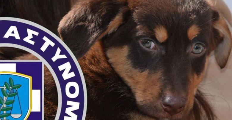 Photo of Υψηλά τα ποσοστά κακοποίησης ζώων στην Ελλάδα