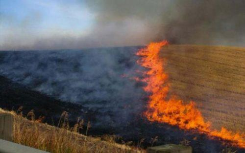 Photo of Συγκέντρωση του Αγροτικού Συλλόγου Χαλκιάδων για την καύση των σιτοκαλαμιών