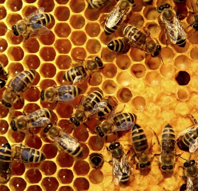 Photo of Προστασία μελισσών από χημικούς ψεκασμούς