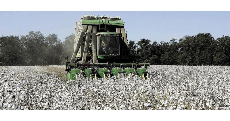 Photo of Εγκρίθηκε και ξεκινά άμεσα από την Περιφέρεια Θεσσαλίας το πρόγραμμα προστασίας της βαμβακοκαλλιέργειας στην Π.Ε. Λάρισας