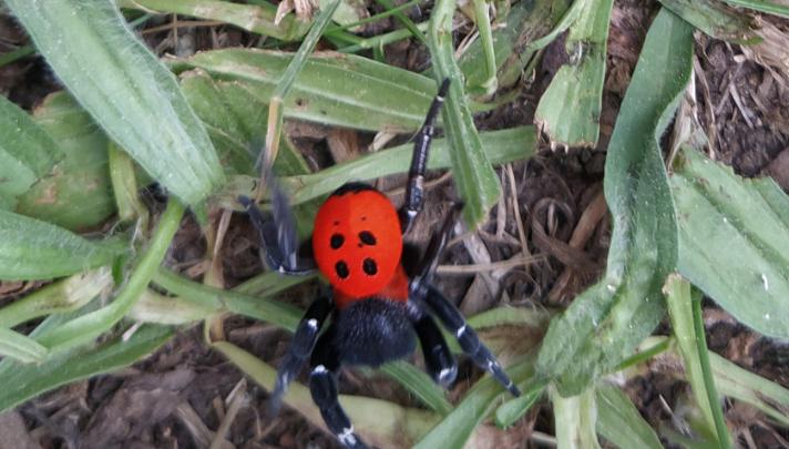 Photo of Σπάνια αράχνη εντοπίστηκε από κατοίκους των Φαρσάλων – Δείτε εικόνες