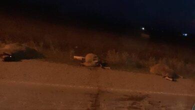 Photo of Όχημα παρέσυρε και σκότωσε 4 πρόβατα στα Φάρσαλα – Στην περιφερειακή οδό της πόλης